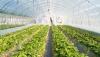 Tuyển 10 nam làm Nông nghiệp tại tỉnh Shizuoka | Thi tuyển 08/04/2015